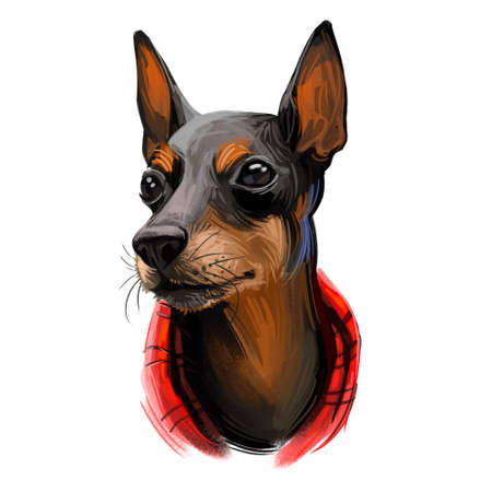 Toy Manchester Terrier dog breed portrait isolated on white. Digital art illustration, animal watercolor drawing of hand drawn doggy for web. Small pet with short black coat marked with tan.