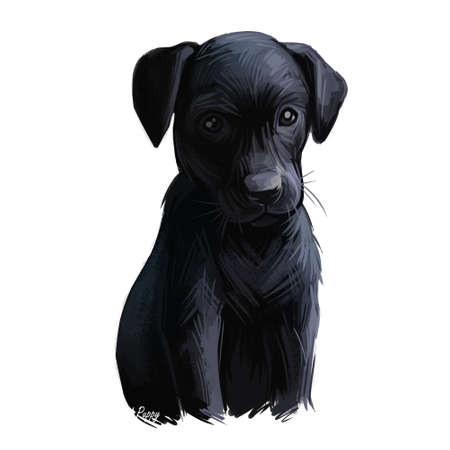 Majorca shepherd puppy watercolor pet portrait digital art. Canine originated in Spain, Balearic Islands used for guarding sheep and as general purpose farm dog. Domestic animal mammal with fur