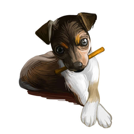 Majorca ratter puppy watercolor portrait closeup digital art. Pet domestic animal mammal playing with long stick, originated from Spain. Canine with playful mood and short muzzle, killer of rodents Imagens