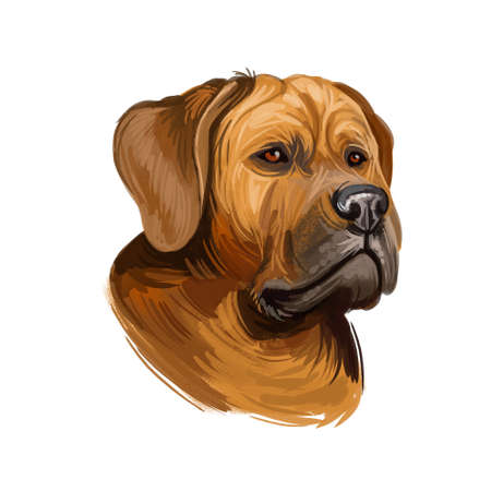 Tosa or Japanese Mastiff dog breed portrait isolated on white. Digital art illustration, animal watercolor drawing of hand drawn doggy for web. Coat of pet short and smooth and have light brown color