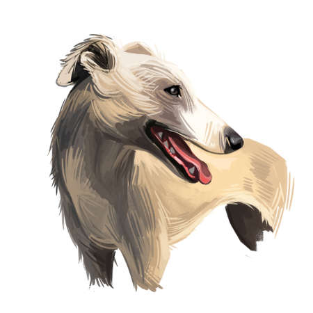 English Whippet or Snap dog breed portrait isolated on white. Digital art illustration, animal watercolor drawing of hand drawn doggy for web. Pet has pointed muzzle, short and smooth coat cream color Stok Fotoğraf