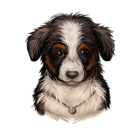 Miniature American shepherd MAS dog purebred digital art. Canine used for herding livestock and protecting animals, mammal hound wearing collar. Puppy originated from USA, watercolor portrait
