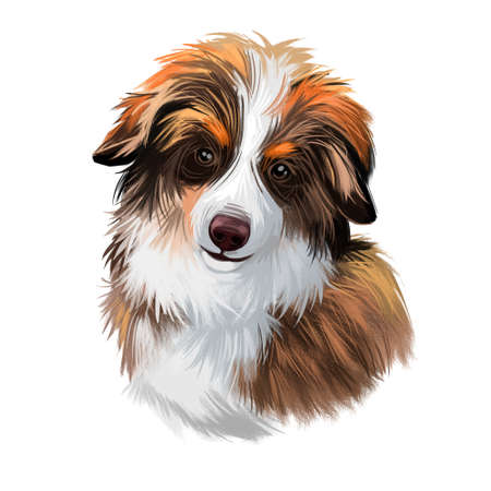 Miniature Australian shepherd dog, small puppy digital art. Herding portrait of muzzle of protecting domesticated animal useful in farming. Australia originated pet