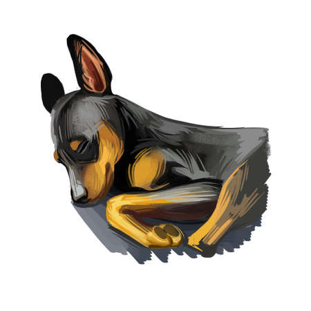Miniature pinscher puppy, king of toys breed digital art. Zwergpinscher purebred pet from Germany, min pin domestic animal. Imagens
