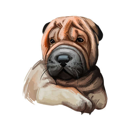 Miniature shar pei dog, puppy of Chinese origin digital art. Canine with big muzzle and short fur, domesticated doggy with whiskers. Purebred from China, watercolor portrait of pet, canis familiaris Stock Photo