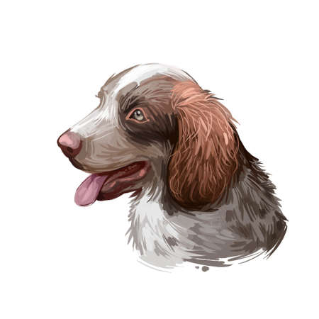 Munsterlander large dog breed, German purebred pet digital art. Puppy of gundog, hound canine for protection and guardian. Animal originated from Germany, closeup watercolor portrait and text Stock Photo