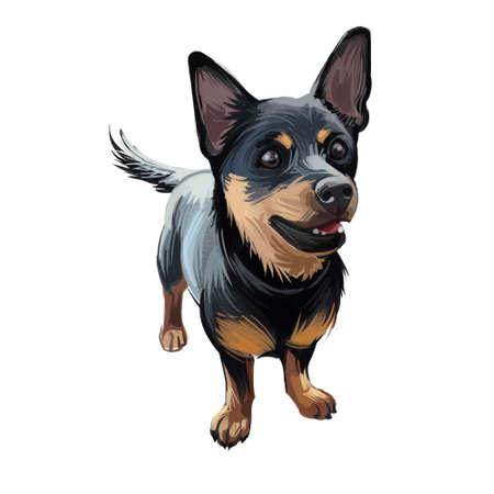 Lancashire heeler Ormskirk terrier puppy breed digital art. Drover and cattle herder, domesticated animal mammal with long muzzle and fur. Vulnerable breed originated in United Kingdom England