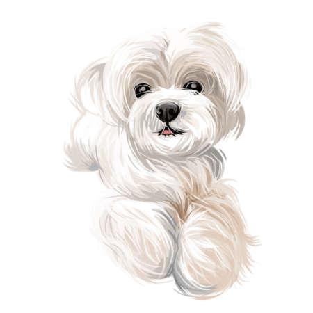 Maltesischer Welpe, Canis Maelitacus, Haustierrasse des Spielzeugtyps Aquarell. Haustier von kleiner Größe, realistischer Portarit-Nahaufnahmehund aus Malta, Hund mit langem Fell, Schnauze von freundlichem Hundesäugetier