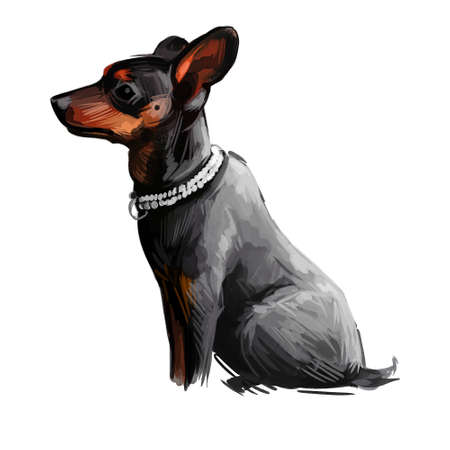Manchester terrier dog wearing collar pet digital art. Hound rat baiting canine mammal, domesticated doggy watercolor portrait closeup. Puppy of standard breed from England, British furry canine