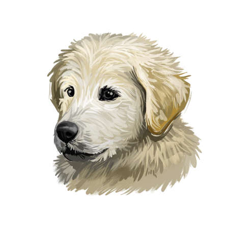Maremma sheepdog guardian of livestock dog digital art. Italian purebred with long fur, Abruzzese breed of domestic animal. Mammal from Italy, puppy of Maremmano breed watercolor portrait closeup