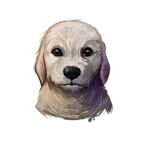 Labrador Retriever puppy form Canada and UK digital art. Canadian pet used to help people with disabilities, blind and autism person helper. Domesticated animal, lab type, canine with short muzzle