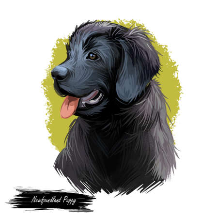 Newfoundland puppy purebred of large size digital art. Watercolor portrait closeup of dog, originated from Canada. Working pet with thick and straight coat, furry canine doggy domesticated animal Stock Photo
