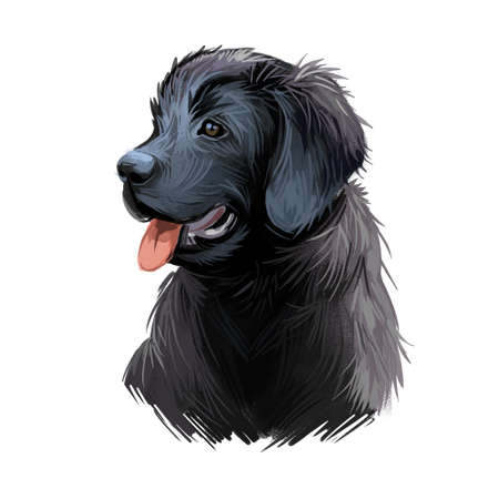 Newfoundland puppy purebred of large size digital art. Watercolor portrait closeup of dog, originated from Canada. Working pet with thick and straight coat, furry canine doggy domesticated animal Stock fotó