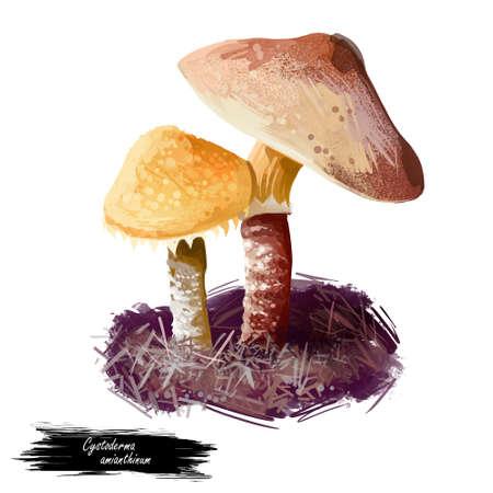 Cystoderma amianthinum parasol, saffron powder-cap, small orange-ochre, or yellowish-brown, gilled mushroom. Edible fungus isolated on white. Digital art illustration, natural food autumn harvest