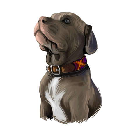 Neapolitan mastiff breed, Mastino Napoletano molosso purebred puppy digital art. Italian domesticated animal, guard dog pet and defender of family canine. Doggy, canis wearing collar on neck Фото со стока