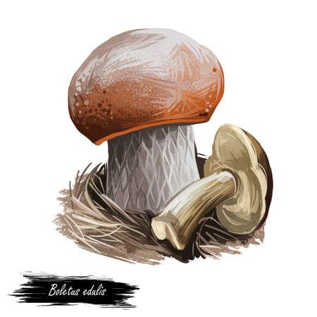 Boletis edulis, penny bun, cep porcino or porcini mushroom digital art illustration. Mushrooming season, plant of gathering plants growing on ground in woods and forests. Closeup clipart fungus.