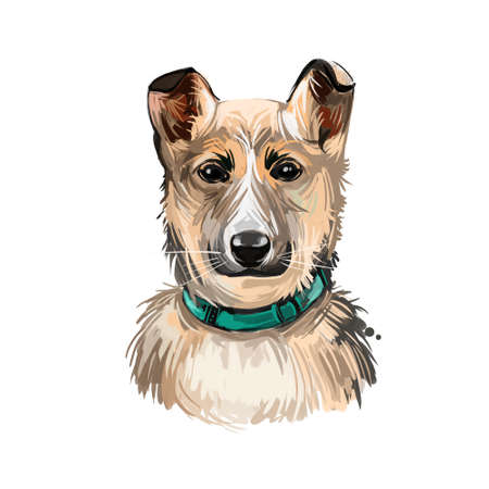 Norwegian lundehund puppy purebred, Scandinavian pet digital art. Moose and herder type of dog, guardian and defender kind, watercolor portrait closeup. Norsk canine wearing collar on its neck