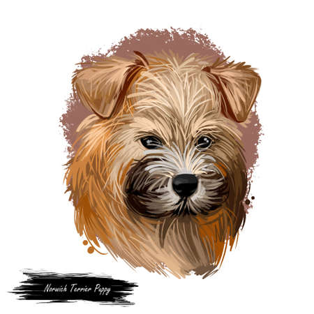 Norwich terrier puppy breed from United Kingdom digital art. Canine watercolor portrait muzzle closeup, pet hunting rodents and vermins. British canine, doggy type with long fur, hound domestic animal Фото со стока