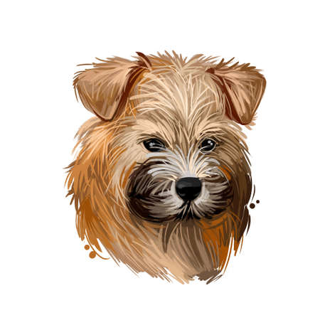 Norwich terrier puppy breed from United Kingdom digital art. Canine watercolor portrait muzzle closeup, pet hunting rodents and vermins. British canine, doggy type with long fur, hound domestic animal Stockfoto