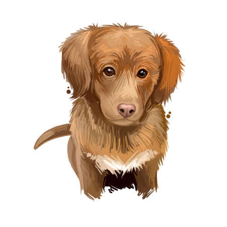 Nova Scotia duck tolling retriever puppy Canadian pet digital art. Gundog from Canada watercolor portrait of muzzle closeup. Hunting pet of toller type, canis lupus small doggy with medium-length coat Foto de archivo - 130995115