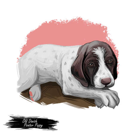 Old Danish pointer puppy purebred dog digital art. Gammel Dansk Honsehund from Denmark, watercolor animals portrait lying calmly. Canine used to point, canis lupus, domestic pet of medium size