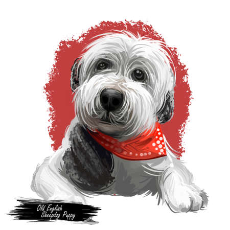 Old English sheepdog puppy wearing handkerchief digital art. Domesticated animal watercolor portrait, closeup of pets muzzle, doggy with long fur. Canine protecting and guarding farm livestock Stock Photo