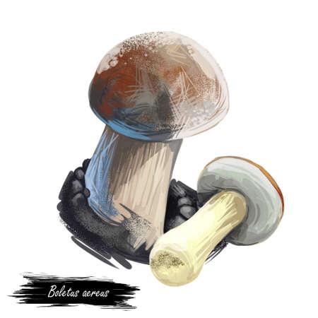Boletus aereus, dark cep, bronze bolete, mushroom digital art illustration. Mushrooming fall season, growing vegetable fungus with thick steam, edible veggie, food for vegans and vegetarians.