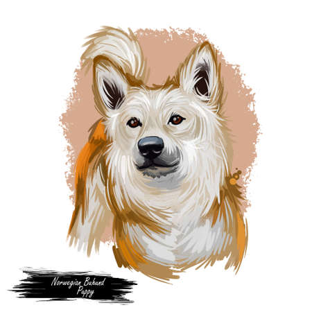 Norwegian buhund puppy from Scandinavia, portrait digital art. Norsk guardian shepherd purebred of spitz type, watercolor closeup of pet. Canine domesticated animal, guardian hound from Norway Stockfoto