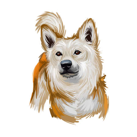 Norwegian buhund puppy from Scandinavia, portrait digital art. Norsk guardian shepherd purebred of spitz type, watercolor closeup of pet. Canine domesticated animal, guardian hound from Norway Imagens