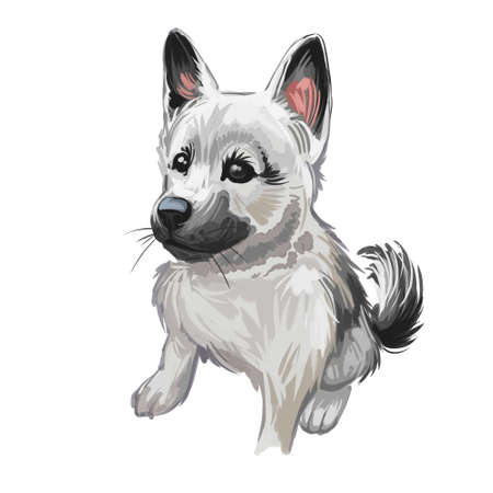 Norwegian elkhound puppy, Harmaa norjanhirvikoira Elghund digital art. Watercolor portrait of tracking animal with curved tail, Norsk domesticated animal calm character. Scandinavian hunting canine