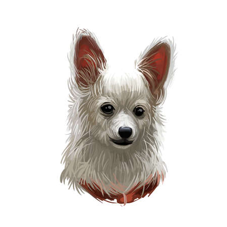 Papillion puppy, continental toy spaniel epagneul nain digital art. Watercolor portrait closeup of lap dog type muzzle, pet from France. French domesticated animal with long wars and short coat fur