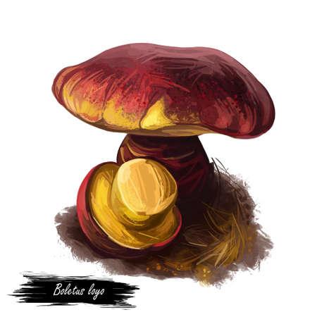 Boletus loyo, Boletaceae family type mushroom digital art illustration. Clipart vegetable fungus with big cap and colored body, ingredient bolete mushrooms. Picking various vegetables season. Stock Photo