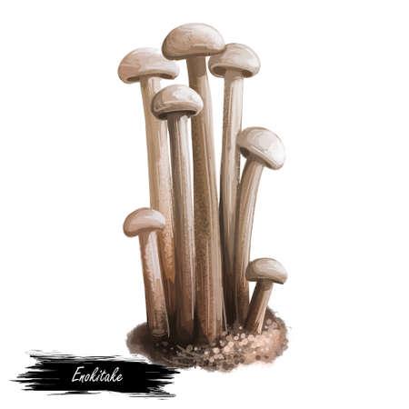 Enokitake flammulina velutipes mushroom, Japan Enoki. Golden needle futu or lily mushroom. Futu, seafood winter fungus, velvet foot stem shank. Digital art illustration, natural food autumn harvest
