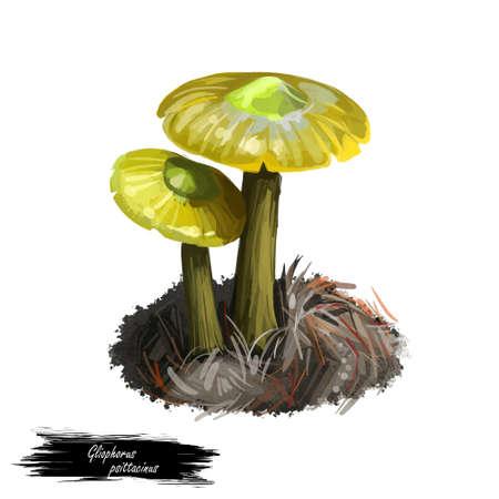 Gliophorus psittacinus Parrot Toadstool or Waxcap,colourful member of genus Gliophorus, found across Europe. Edible fungus isolated on white. Digital art illustration, natural food autumn harvest Stock fotó