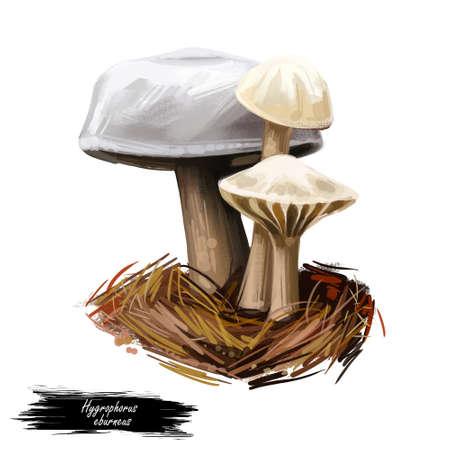 Hygrophorus eburneus ivory waxy cap cowboy handkerchief, species of edible mushroom in waxgill family of fungi isolated on white. Digital art illustration, natural food. Autumn harvest fungi on grass