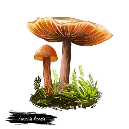 Laccaria laccata deceiver, waxy laccaria, white-spored species of small edible mushroom. Digital art illustration, natural food. Autumn harvest fungi on grass, healthy organic meal. Clipart, web print