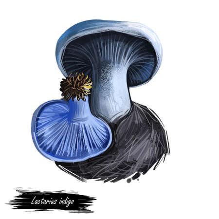 Lactarius indigo, blue lactarius mushroom closeup digital art illustration. Fungi have marine color of body and cap. Mushrooming season, plant of gathering plants growing in woods and forests.