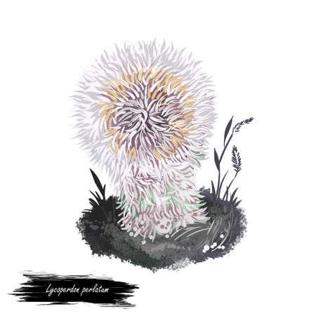 Lycoperdon perlatum mushroom digital art illustration, common puffball watercolor print. Devils snuff-box realistic drawing ingredient food with inscription. Biological type ecology fresh veggie