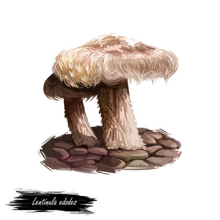 Lentinula edodes mushroom digital art illustration. Collybia watercolor print with inscription, ripe food ingredient with grass, vegetarian meal ripe edible product. Organic veggie vegetable fungi