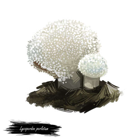 Lycoperdon perlatum mushroom digital art illustration. Gem-studded puffball ecological ingredient, biodiversity watercolor print, realistic drawing with inscription. White fungus, fungi design