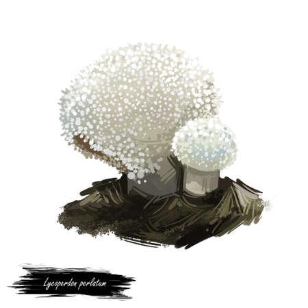Lycoperdon perlatum mushroom digital art illustration. Gem-studded puffball ecological ingredient, biodiversity watercolor print, realistic drawing with inscription. White fungus, fungi design