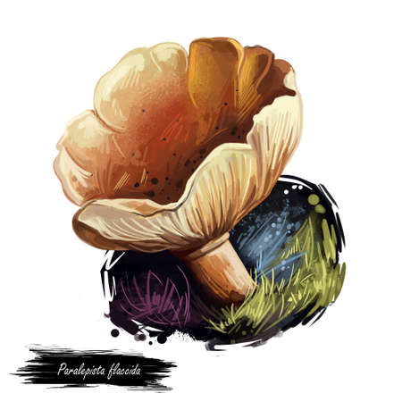 Paralepista flaccida mushroom digital art illustration. Clitocybe flaccida watercolor print realistic drawing with inscription. Tawny Funnel Cap Agaricus inversus fungi design, fungus on ground