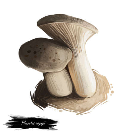 Pleurotus eryngii, king oyster or trumpet or French horn mushroom closeup digital art illustration. Boletus with light grey shade of hat.