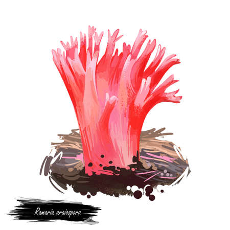 Ramaria araiospora or red coral mushroom closeup digital art illustration. Pink boletus that grows on corals in sea or ocean. Terminal branches finely divided into sharp tips. Plants growing in water.