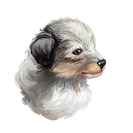 Shetland sheepdog purebred domesticated animal digital art. Canine watercolor portrait closeup, mammal with long fur, long-haired pet looking in distance. Hand drawn guard doggy protecting hound. Stock Photo - 130769303