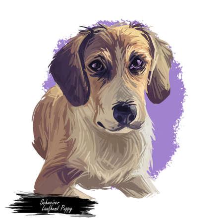 Schweizer laufhund dog animal breed with long ears German puppy, digital art illustration. Pet of German origin doggy portrait canine hand drawn portrait. Graphic clipart design of trained animal