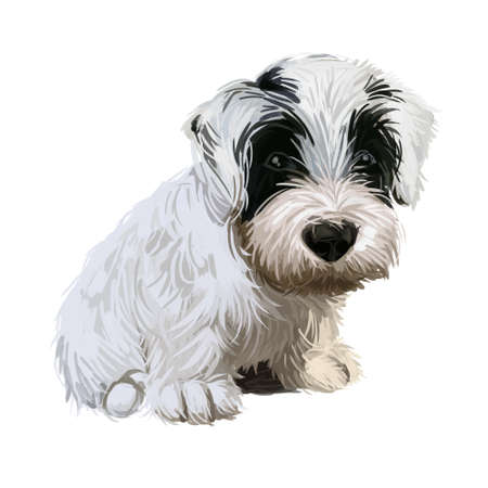 Sealyham Terrier toy god, pet of small size watercolor portrait digital art. Hand drawn domestic animal with long haired coat canine purebred with opened mouth, toy breed small sized muzzle