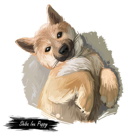 Shiba Inu Brushwood turf Japanese dog purebred digital art. Watercolor portrait of domesticated animal, mammal with smooth coat from Japan, Asian breed of canine. Hand drawn doggish body closeup.