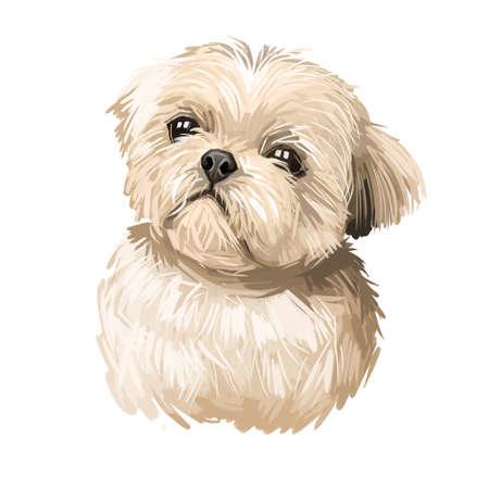 Shih Tzu lap dog toy pet digital art. Small Chrysanthemum breed watercolor portrait closeup, hand drawn muzzle of canine originated from China.