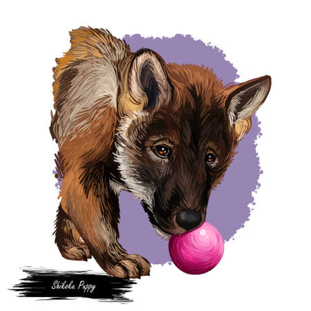 Shikoku dog originated from Japan, Japanese dog digital art. Hand drawn animalistic watercolor portrait, closeup of pet muzzle, canine from Asia. Mammal with furry coat, long haired fur of doggy Zdjęcie Seryjne